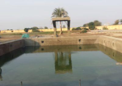 حمام سباحة بكلية الزراعة بمشتهر – جامعة بنها